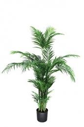 Areca Palm 150 cm tall